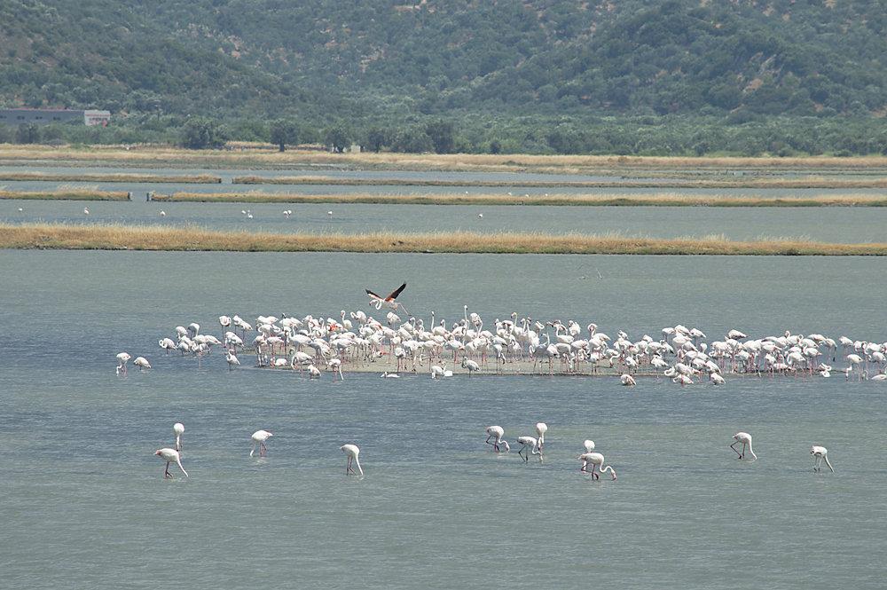 Flamingos-1.jpg.e02e17e9485a05ae906ae5015ddb5db4.jpg