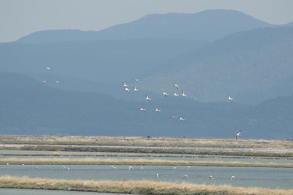Flamingos-2.jpg.a1d9950eeb9baf3fc1678b7ddff24546.jpg